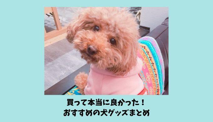 犬も飼い主も喜ぶ犬グッズ|おすすめペット用品