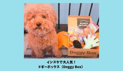 ドギーボックス(DoggyBox)はインスタで超人気!ドギボ大好き犬スタグラマー8選