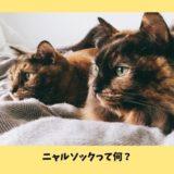 【ニャルソックって何?】猫が自宅警備する理由とニャルソックとして働いてもらう方法