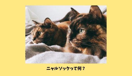 【ニャルソックとは】猫が自宅警備する理由とニャルソックとして働いてもらう方法