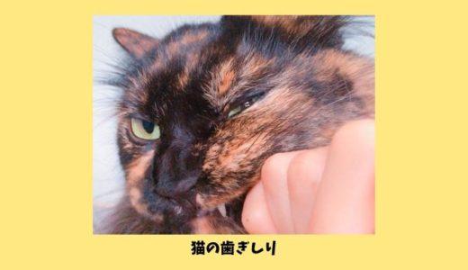 猫の歯ぎしりは癖?甘えてる?口をしゃりしゃり歯ぎしりする原因や注意すべきポイント