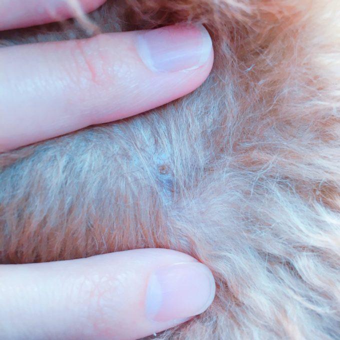 犬のニキビ跡