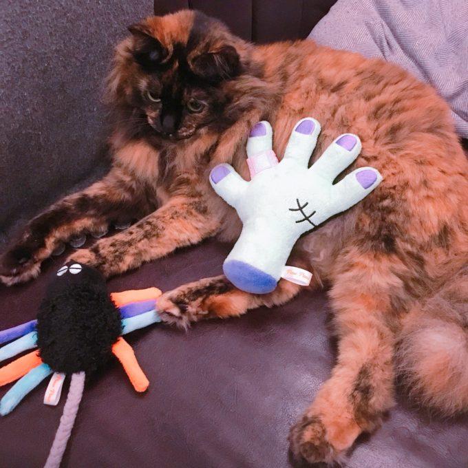 ドギーボックスのおもちゃと猫