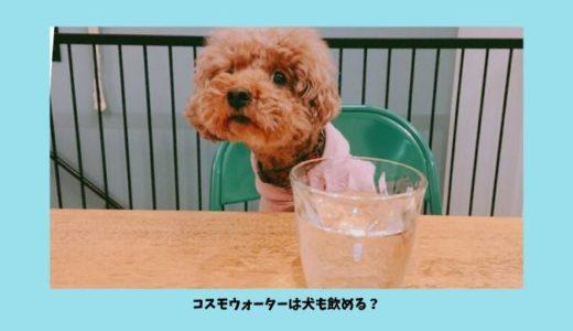 コスモウォーターは犬も飲める!ウォーターサーバーの水を犬の飲用水にする際の注意点