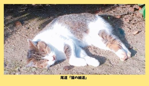 尾道の猫の細道は意外とネコがいない?!