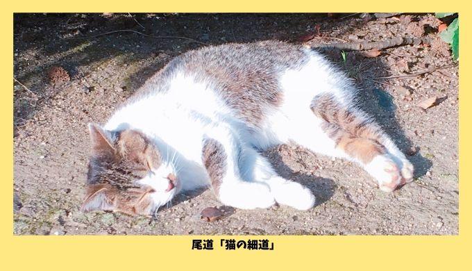 尾道の猫の細道