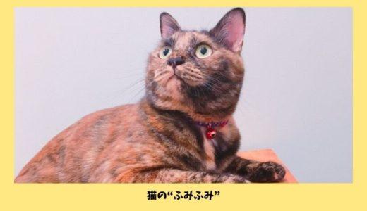 飼い猫がふみふみしないのはなぜ?「ふみふみ」の意味としない猫との違いについて
