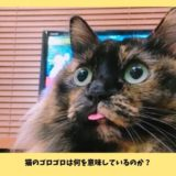 猫がゴロゴロ喉を鳴らす意味は甘えだけではない!ストレスや病気のサインかも?!