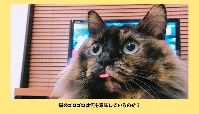 猫がゴロゴロ喉を鳴らす意味