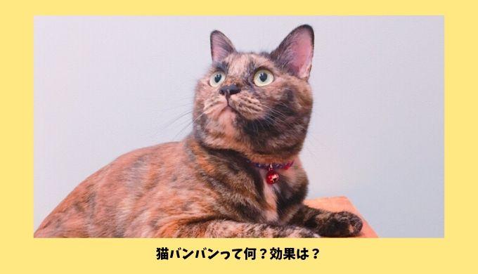 猫バンバンの効果