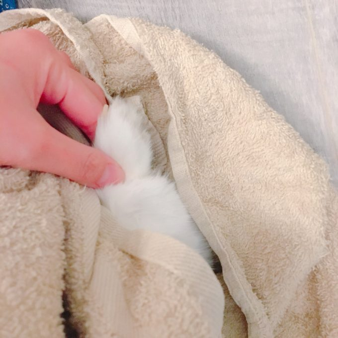 暴れるうさぎの爪切り方法