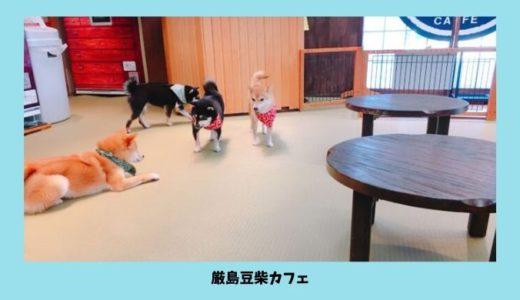 【厳島豆柴カフェ】広島県宮島の人気店に行ってきました