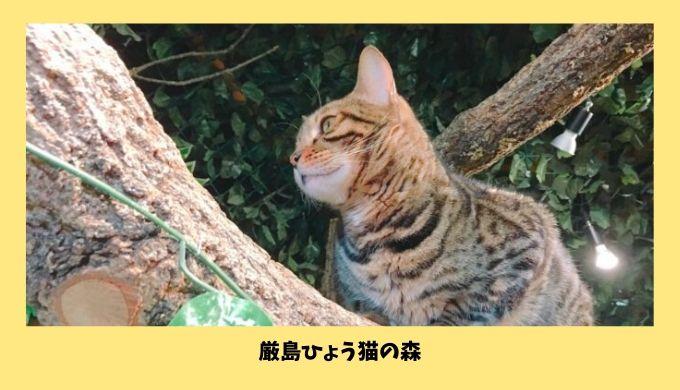 宮島の「厳島ひょう猫の森」
