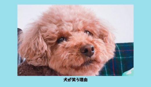 犬も笑う?!犬の笑顔に隠された理由とは?