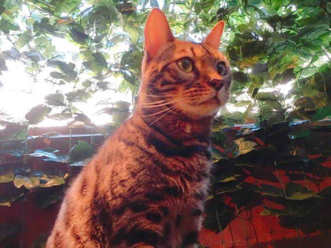 宮島「ヒョウ猫の森」
