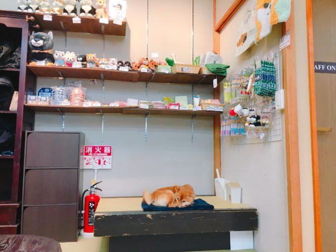 宮島の厳島豆柴カフェ