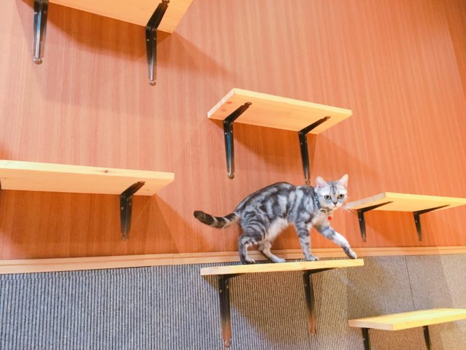 猫喫茶空陸家(広島本通り店)