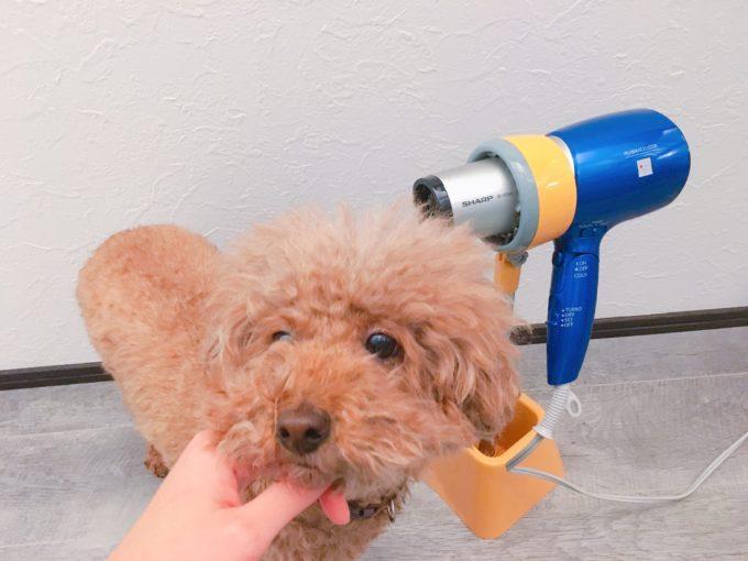 犬用ドライヤー固定スタンド