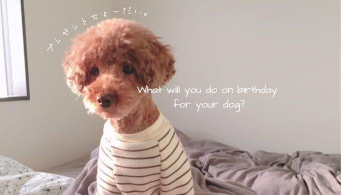 犬の誕生日の祝い方