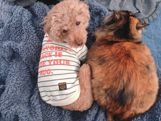 犬・猫・うさぎの同居