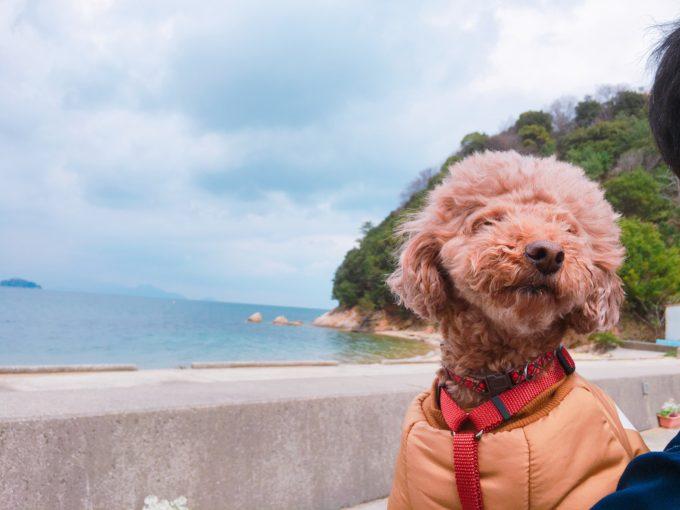 ドルフィンセンター 犬