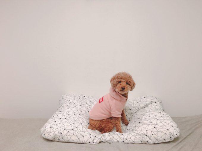 IKEA 犬 ベッド