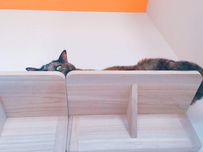 テレワーク 猫